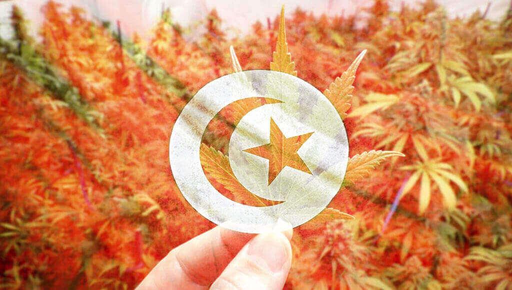 tunez marihuana