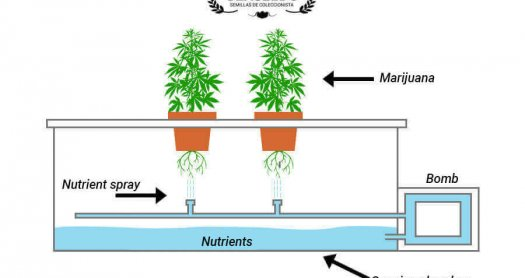 Aeroponic cultivation structure