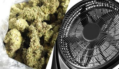 HOW TO DRY MARIJUANA BUDS – FAST AND EFFECTIVE