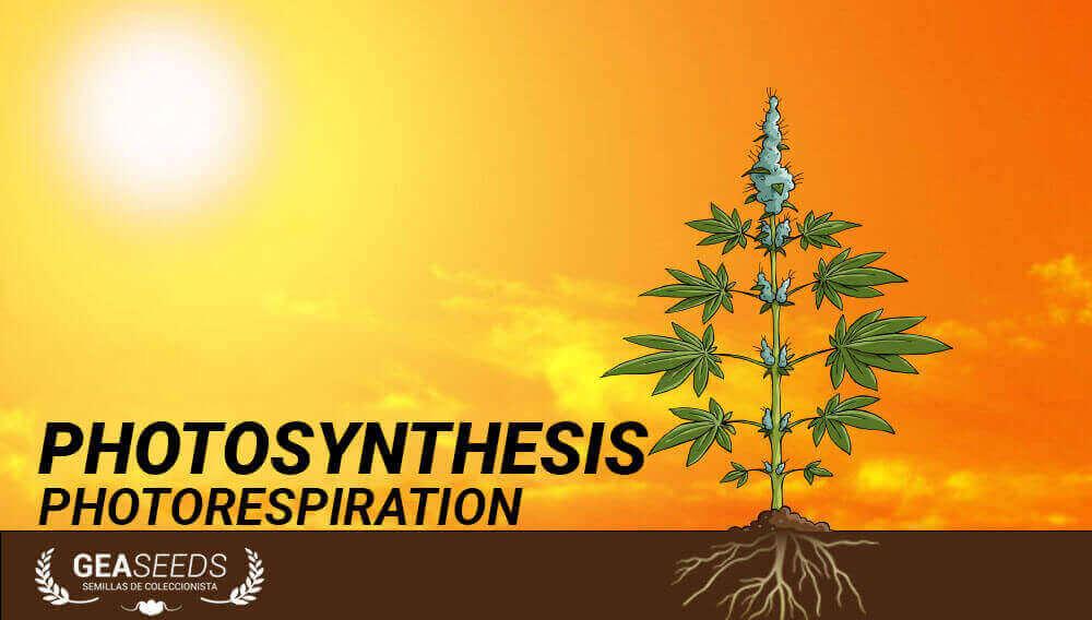 photosynthesis photorespiration
