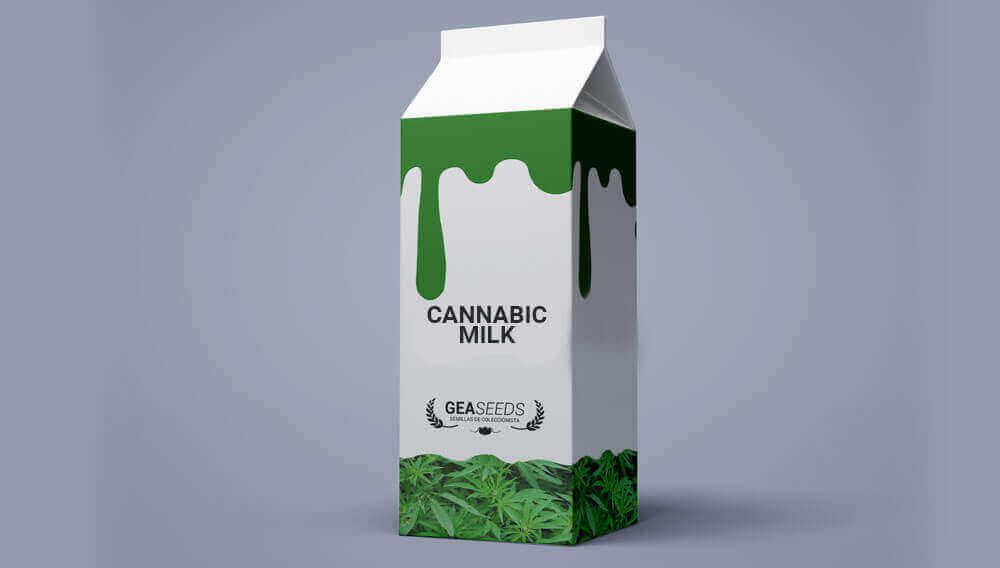 cannabic milk