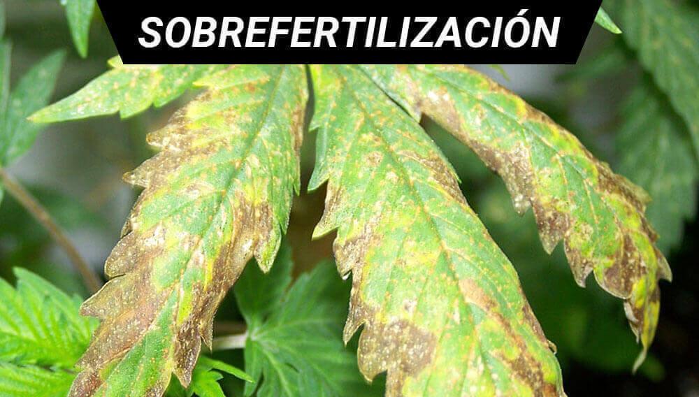 Sobrefertilización