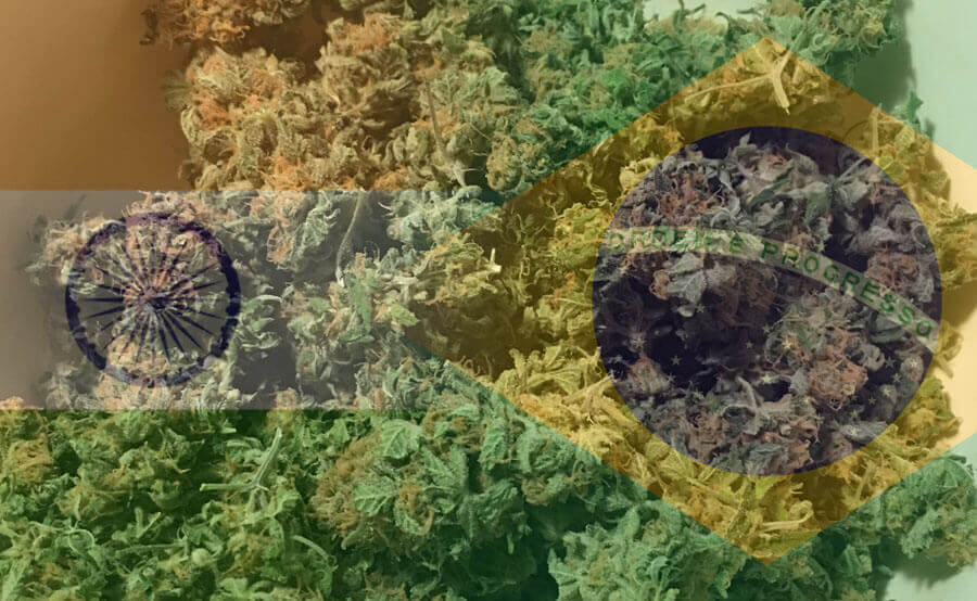 White widow brasil e india
