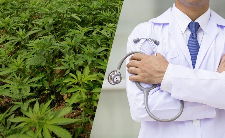 cannabis medico