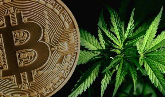 criptomonedas y marihuana