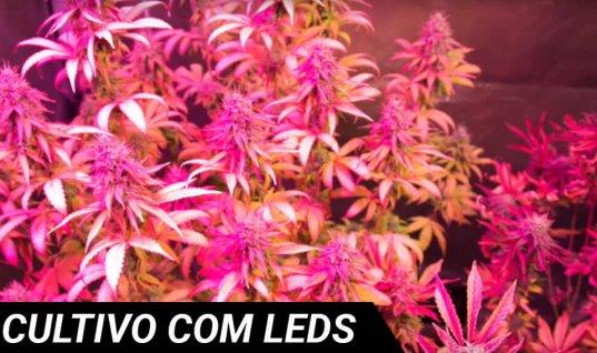 Crescendo com LEDs