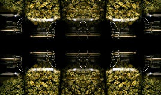 marihuan en bote de cristal