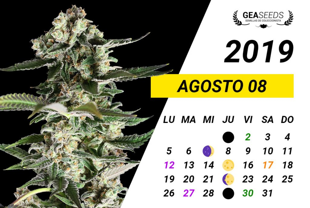 Calendario Agosto 2019