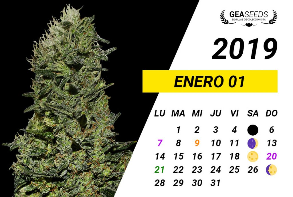 Calendario Enero 2019