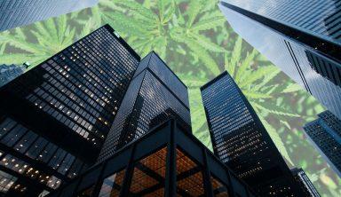 edificios y marihuana