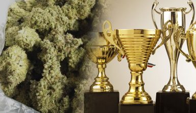 marihuana premio