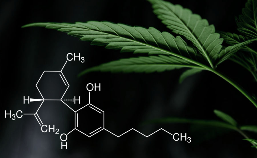 principios activos marihuana