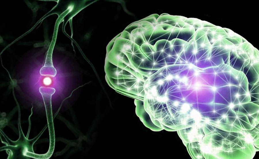 cerebro y neurona