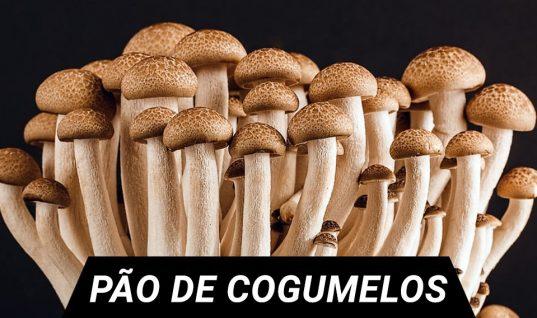 pao cogumelos