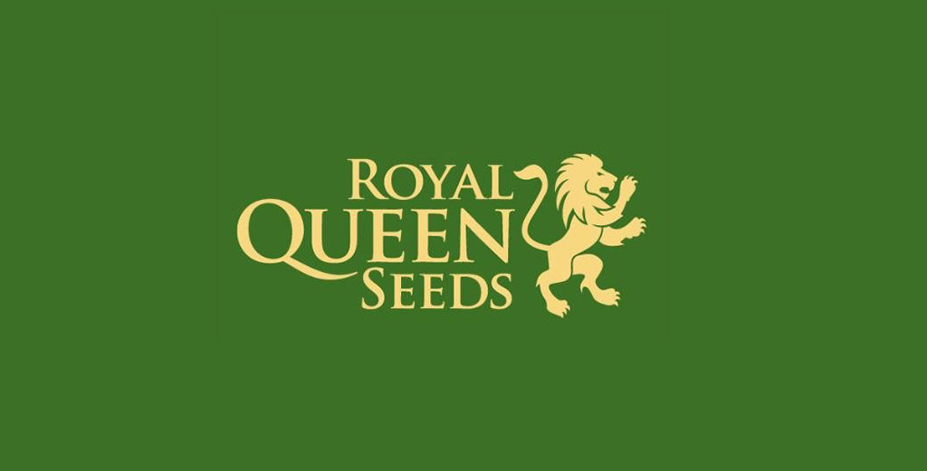 shop royal queen seeds
