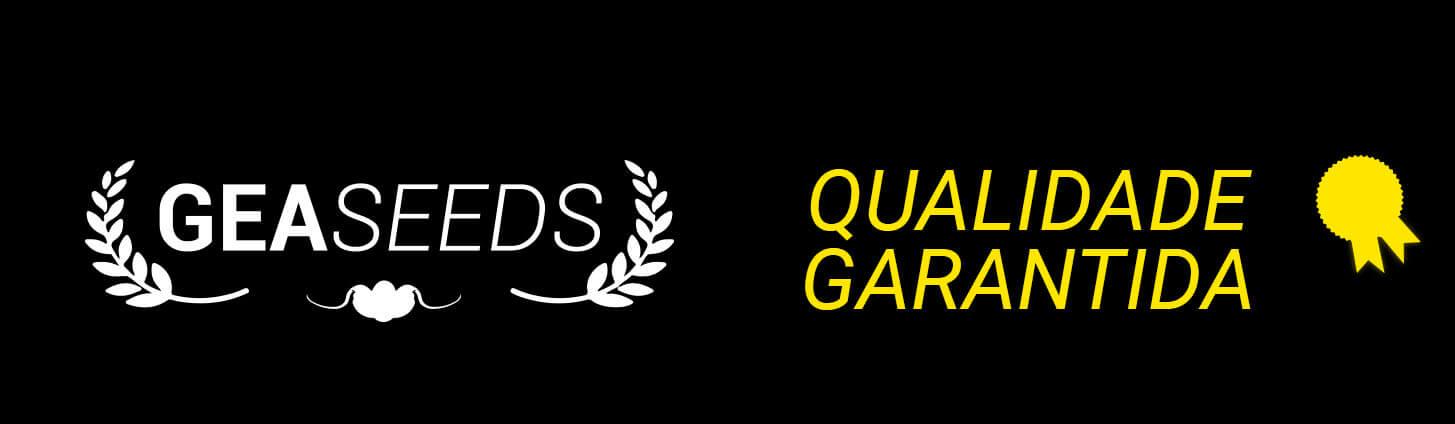 Gea Seeds, garantia de qualidade