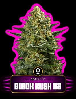 Black Kush 98 Gea Seeds