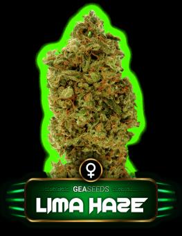 Lima Haze Gea Seeds