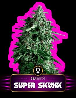 Super Skunk Gea Seeds