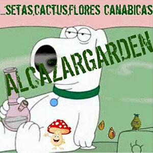 Grow Shop Alcazar Garden