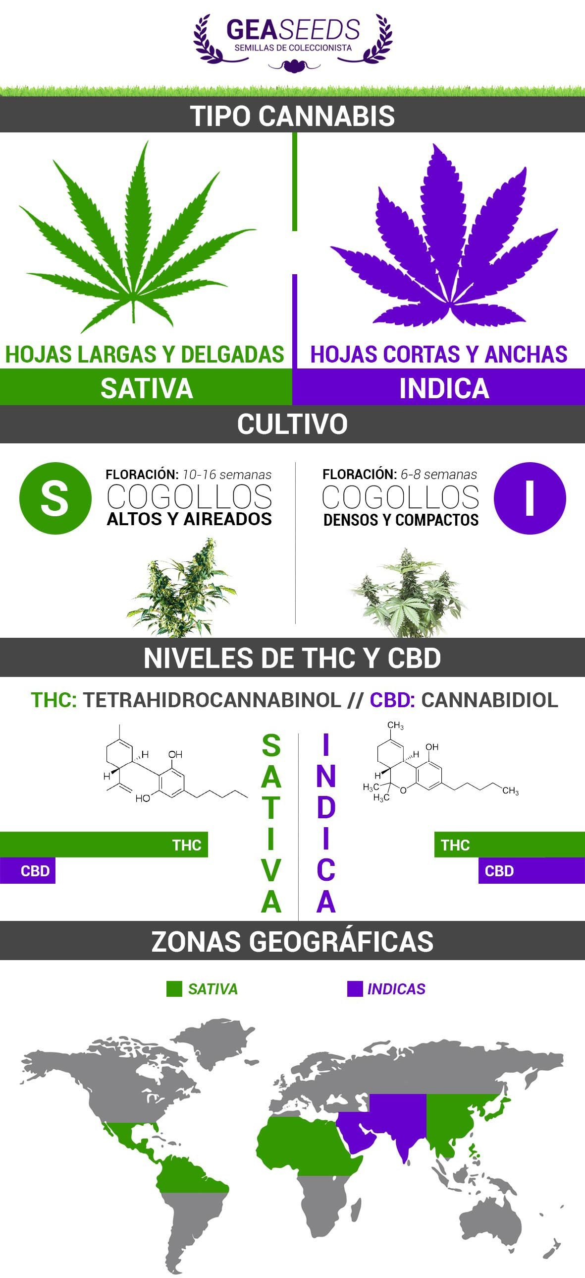marihuanas sativas vs indicas