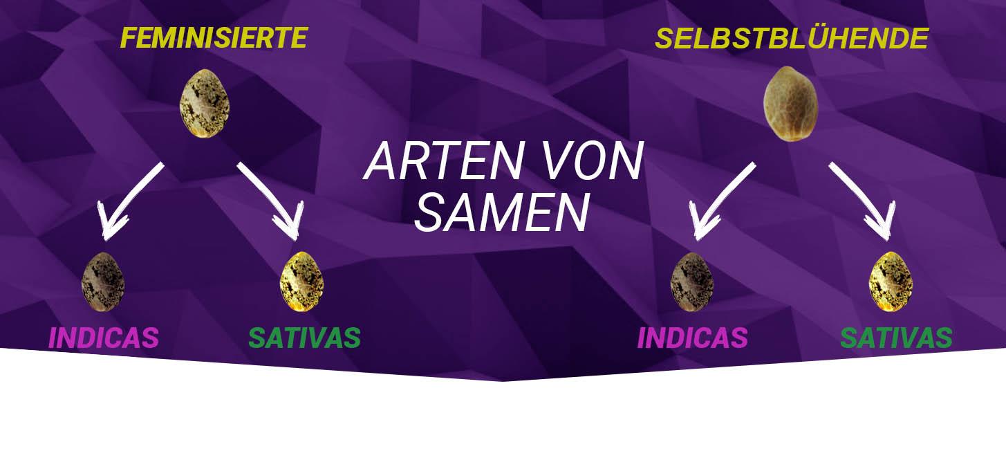 Arten von Samen