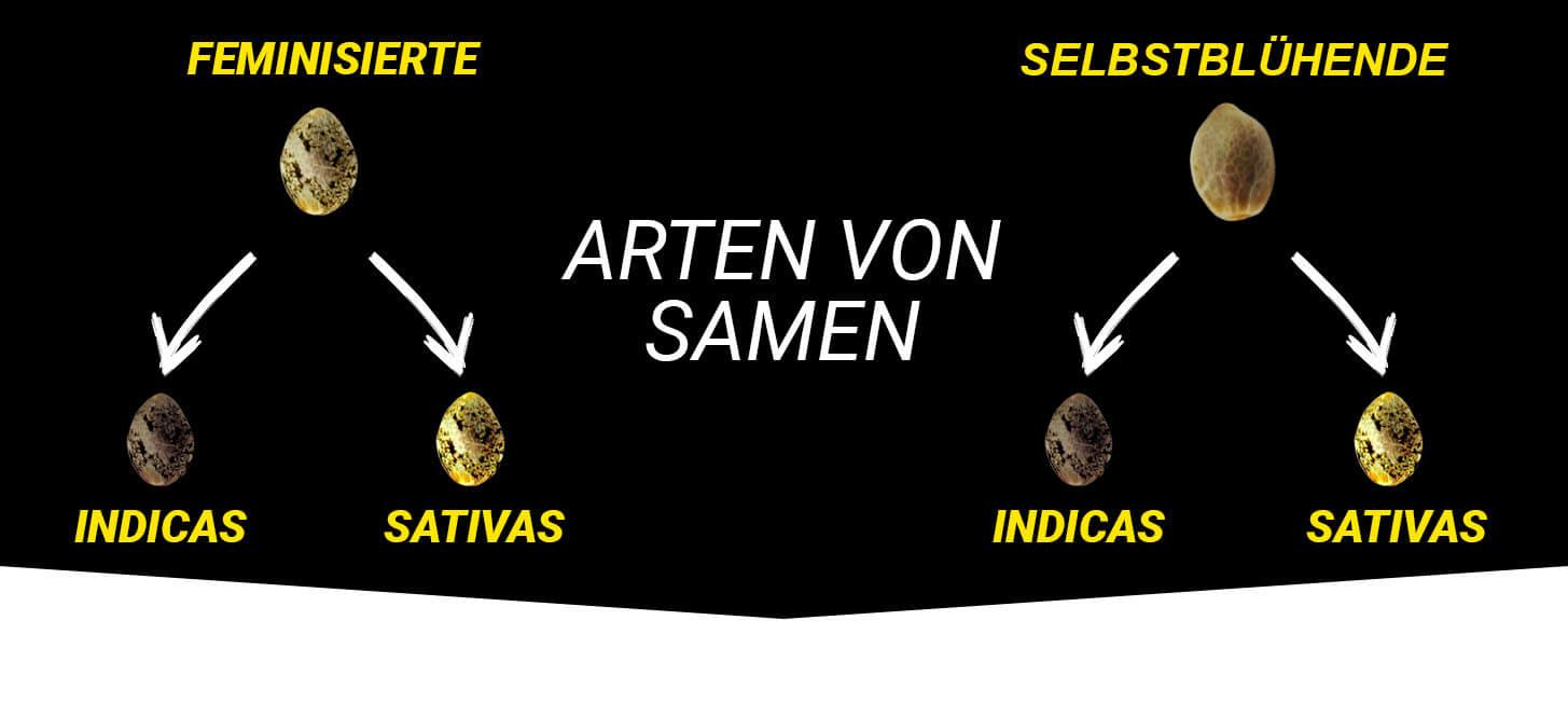 Sorten