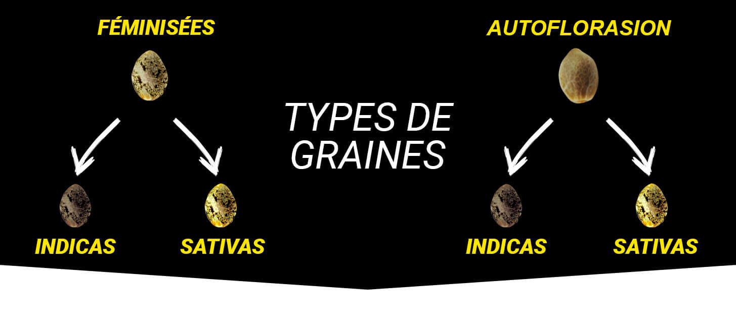 Types Graines
