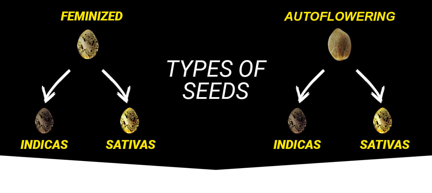 Types of weed seeds